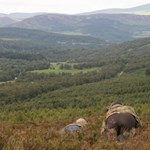 Trophy Hunting on Glenmuick Estate, Red and Roe deer stalking activities for Glenmuick guests.