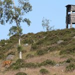 Deer Stalking watch tower on Glenmuick Estate.